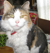 Patches (Mama Kitty)