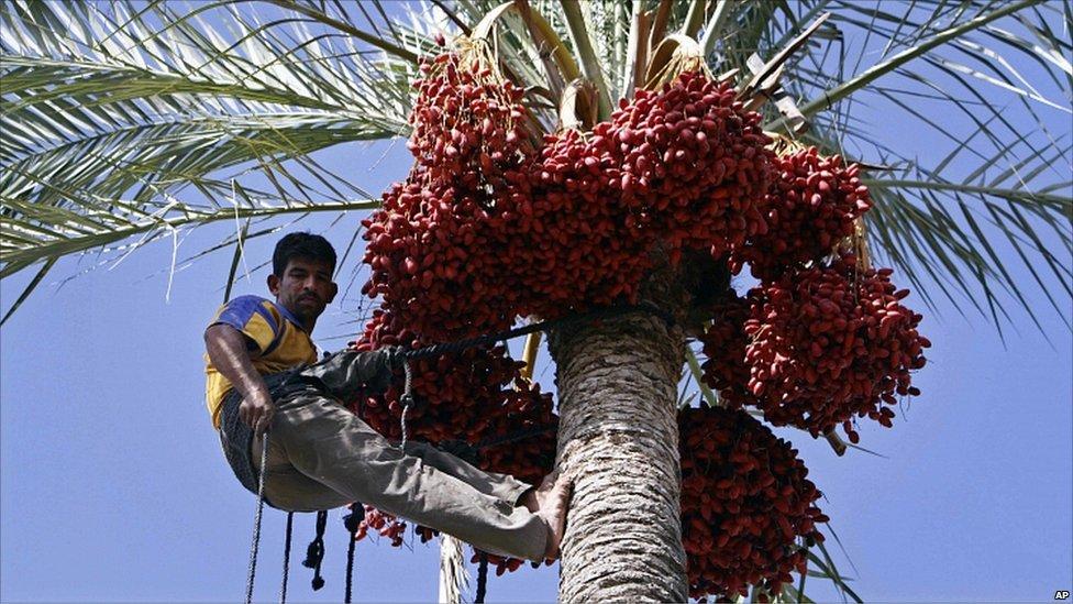 climb dates tree