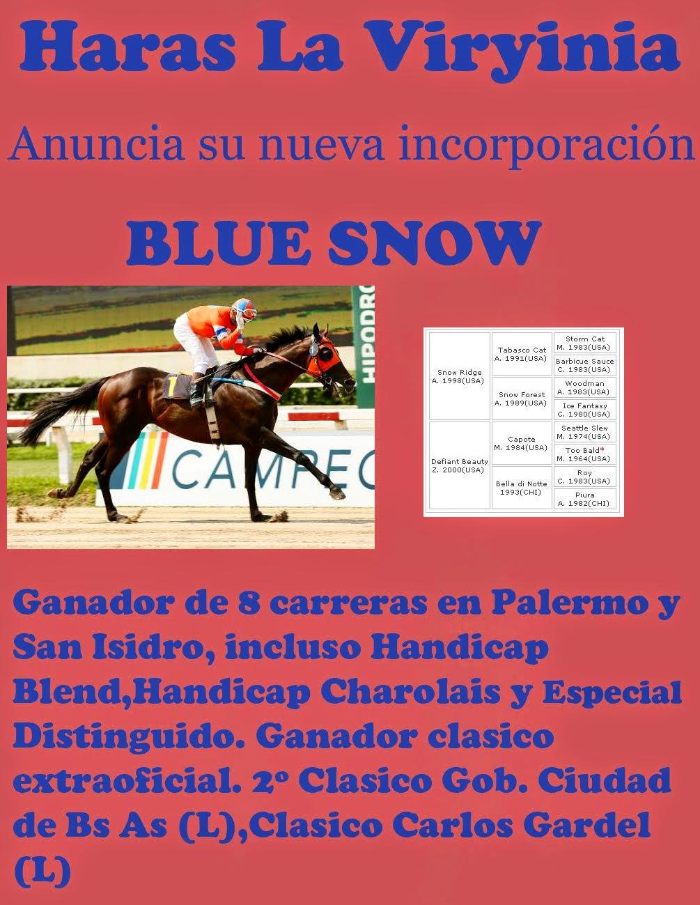 BLUE SNOW 1