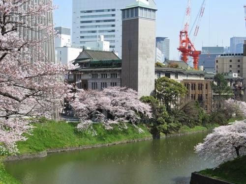 日本武道館下の桜02