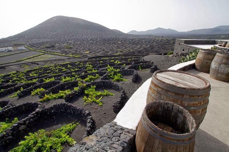 Unique vineyards of Lanzarote, Spain