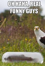 Funny Pics Of Birds