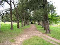 other walkway made with a tunnel of trees landscape