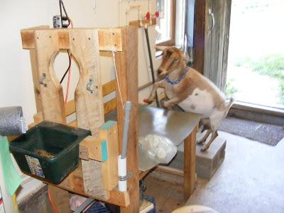 Intermittent Farm Report: Goat Milking - Facilities