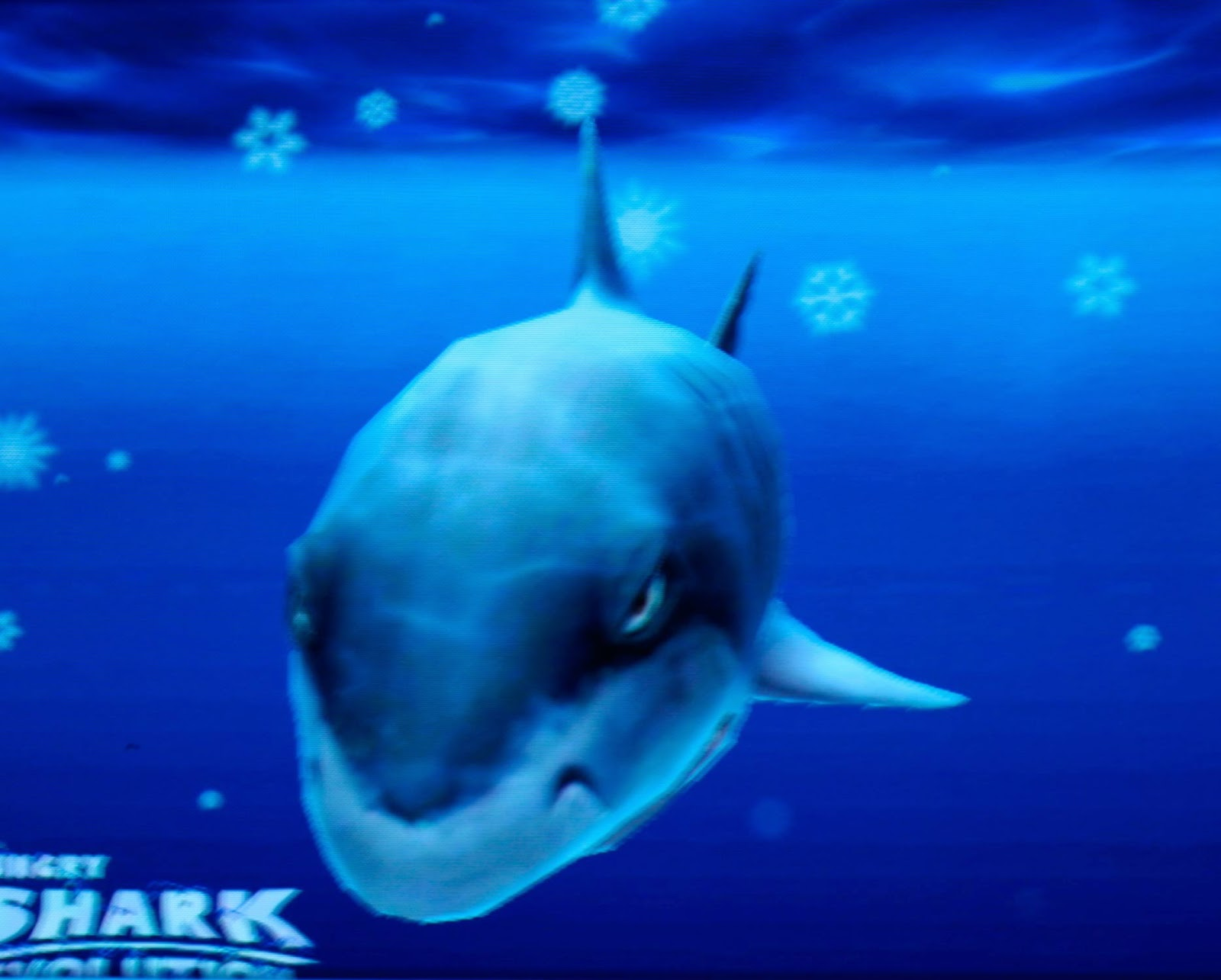 Megalodon Images - Reverse Search