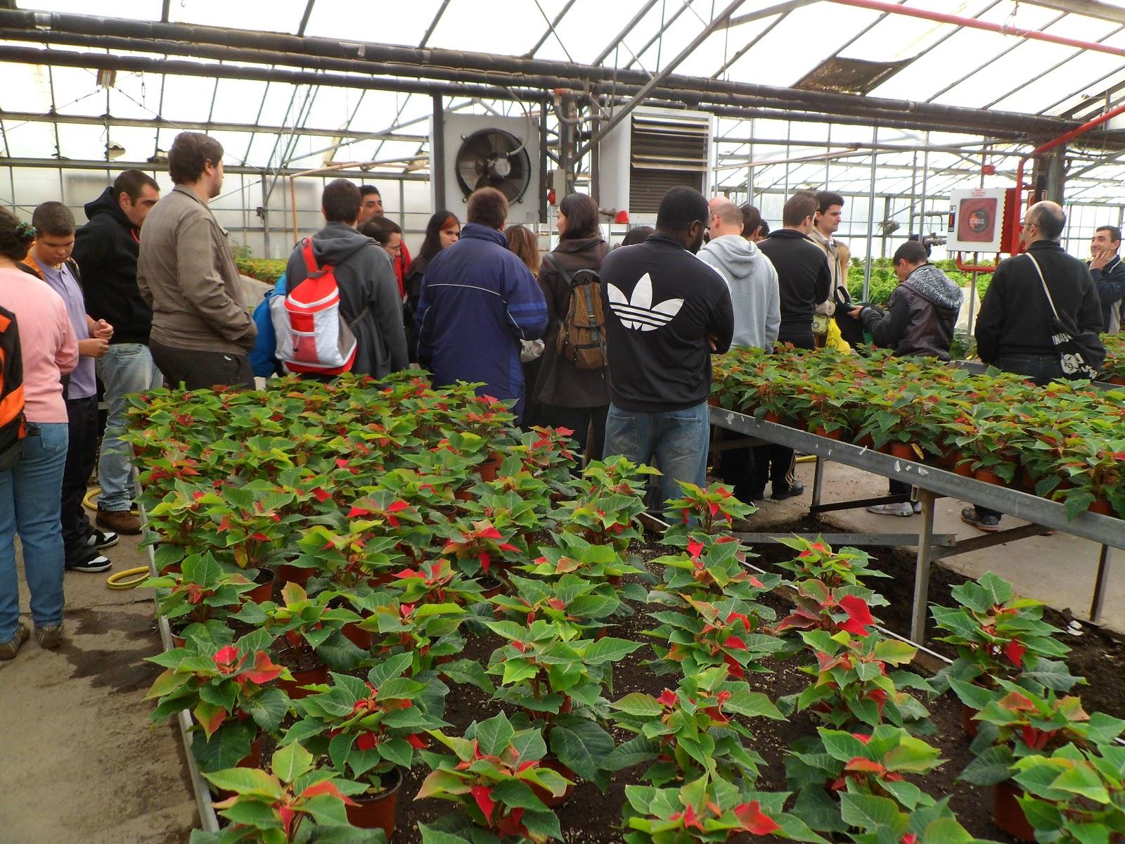 escuela municipal de jardiner a el pinar visita de la On tipos de viveros escolares