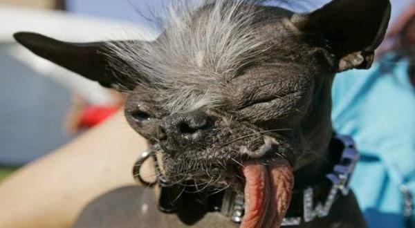 Anjing Terjelek di Dunia Tiba-Tiba Mati