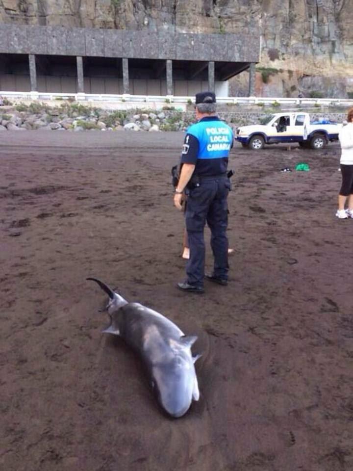 Prospecciones petrolíferas en Canarias y mamíferos marinos: Crónica de una extinción anunciada