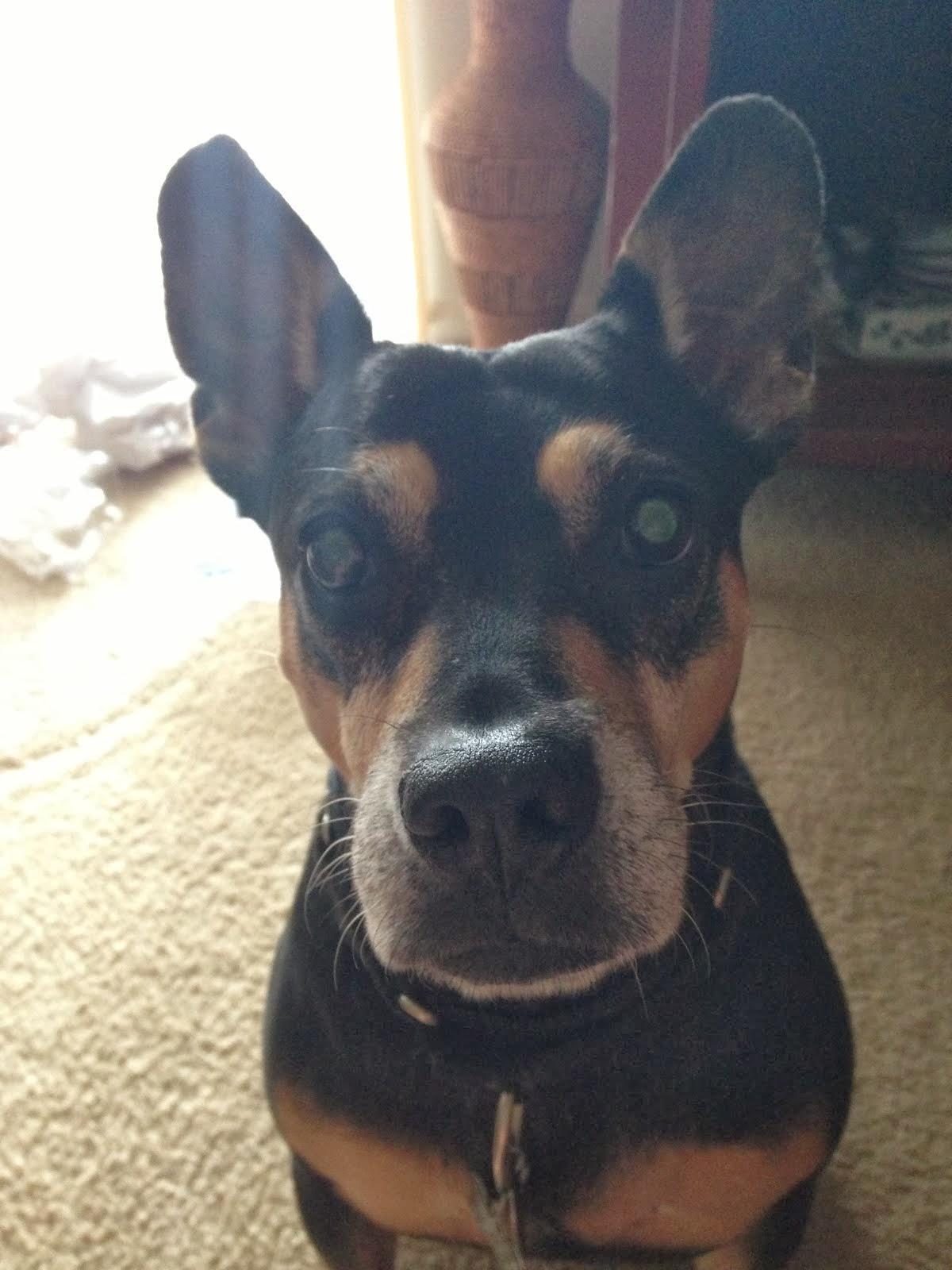 Puppy Payne