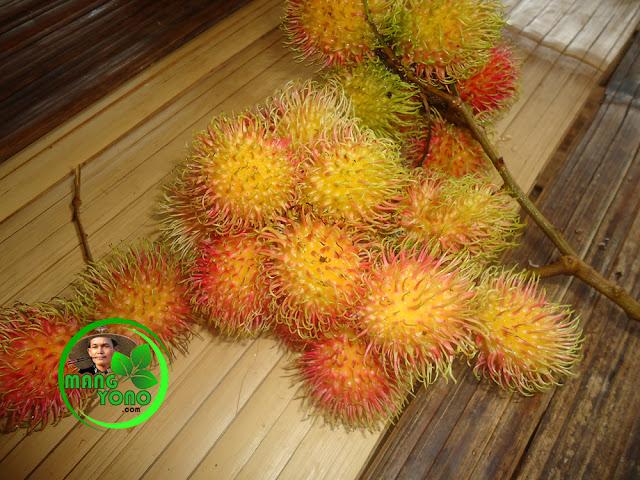 Kandungan dalam buah Rambutan