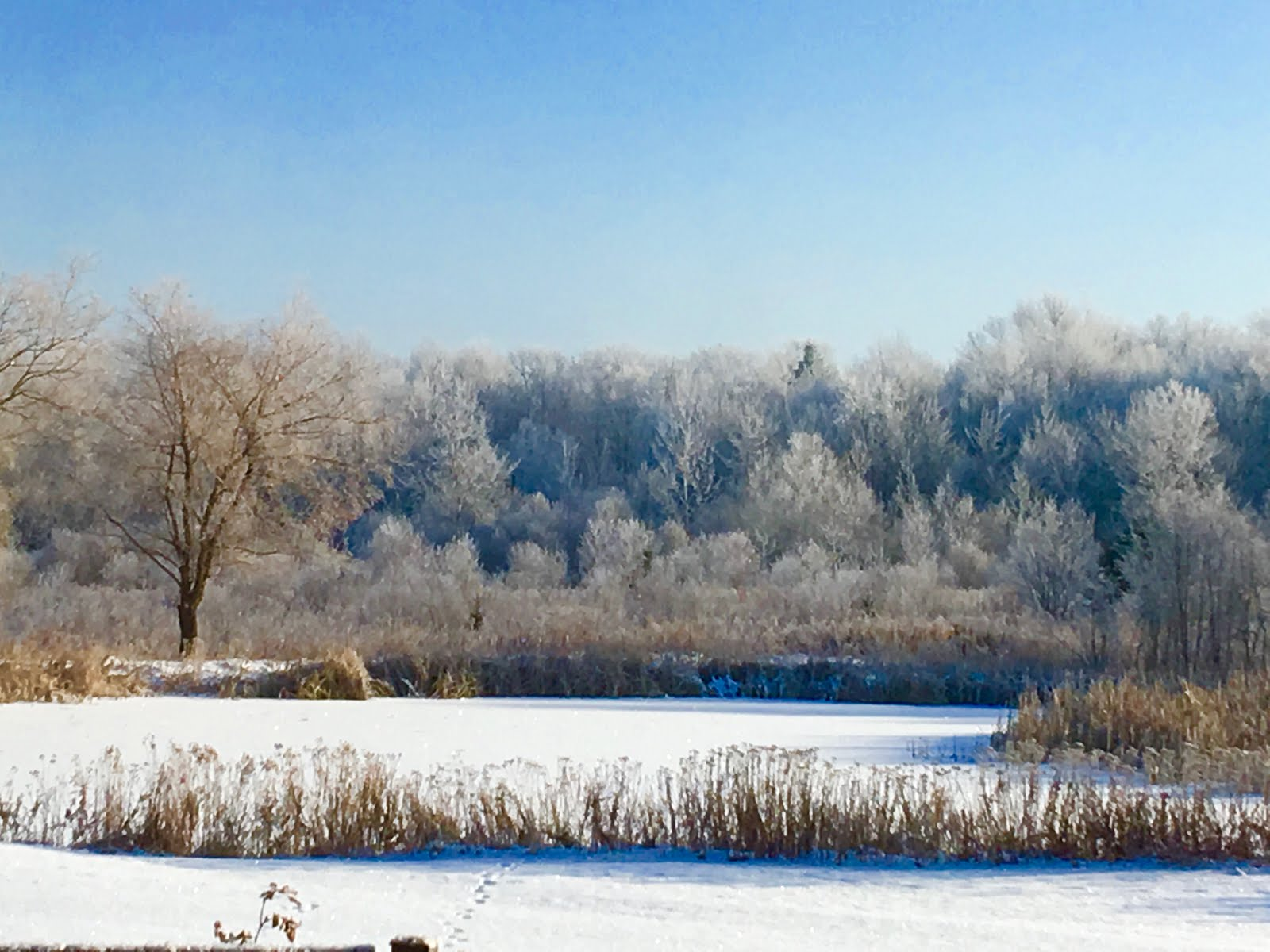 Frosty morning on the pond