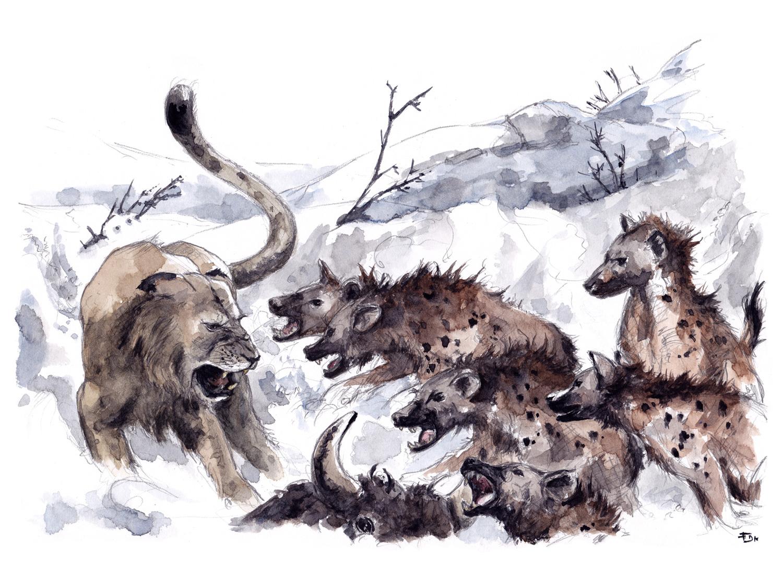 feldrik rivat  illustrateur naturaliste  pr u00e9histoire
