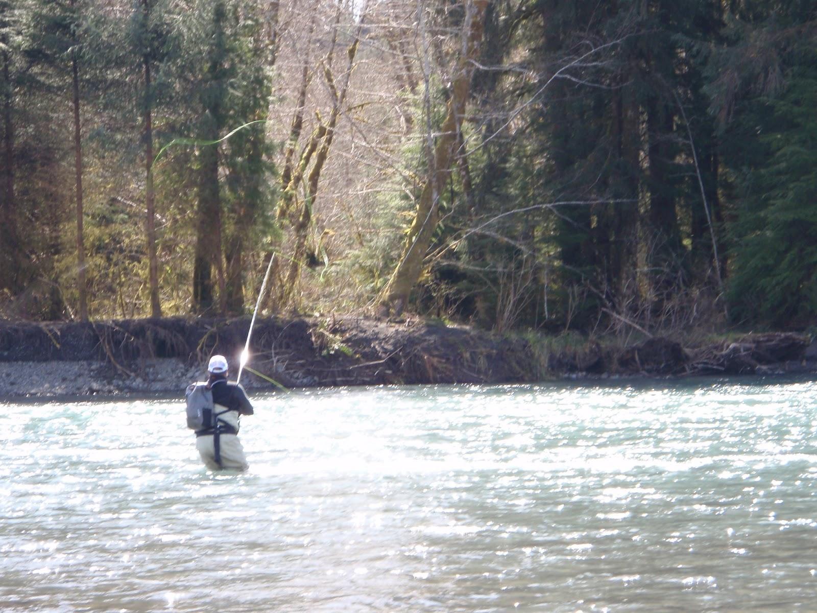 Washington fly fishing february 2013 for Hoh river fishing