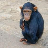 Top 5 des animaux les plus intelligents