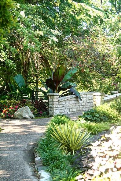 As lilies a walk through a garden - When you walk through the garden ...