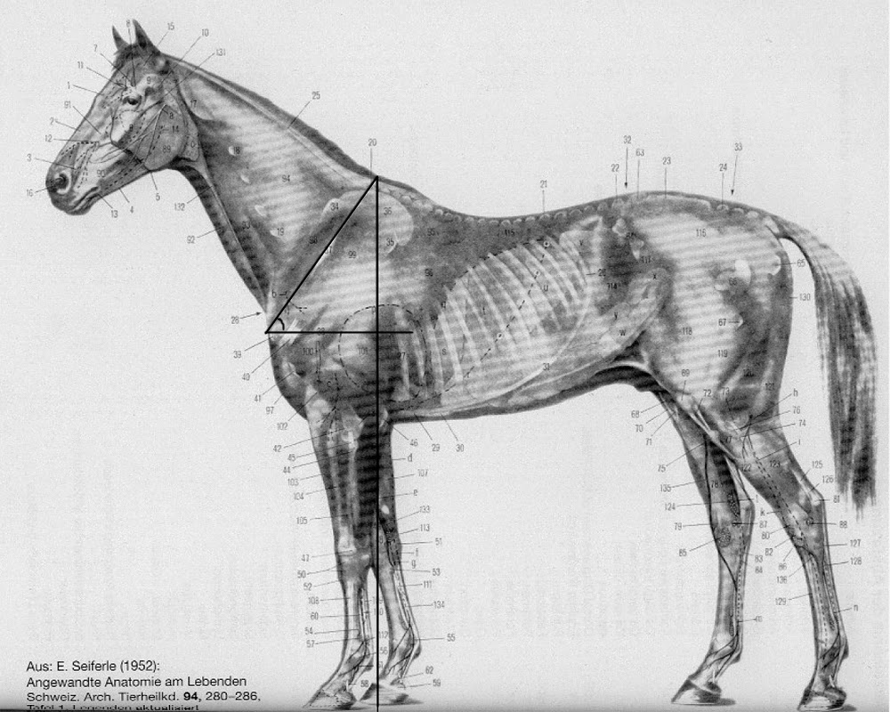 al Holistic Horse & Hoof Care: Connections between angle of the ...