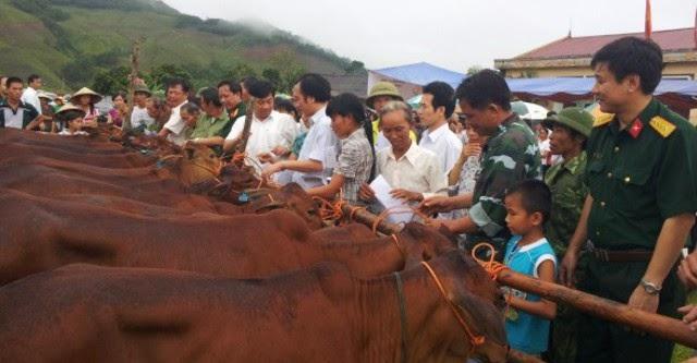 """""""Đổi sim lấy bò"""" ở Quảng Ninh"""