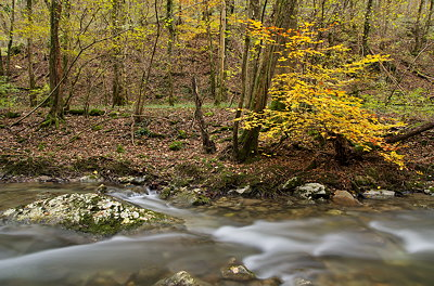 Autumn landscape in the forest along Fornant river- France