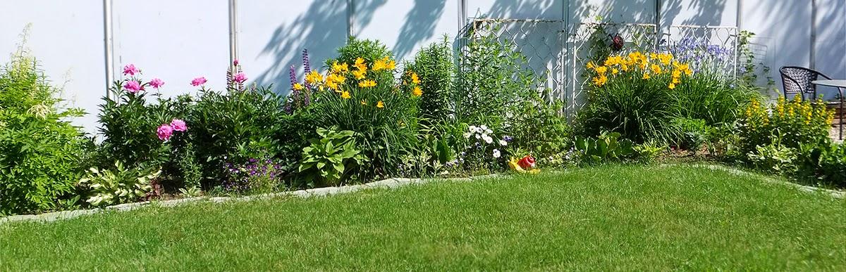 цветы в июне