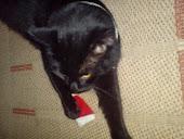 Rambí má vánoce