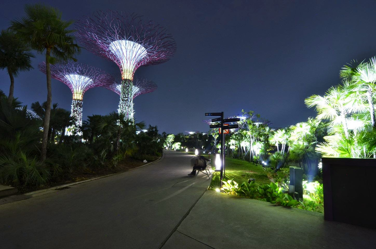 Super Tree Grove Gardens by the Bay Singapore
