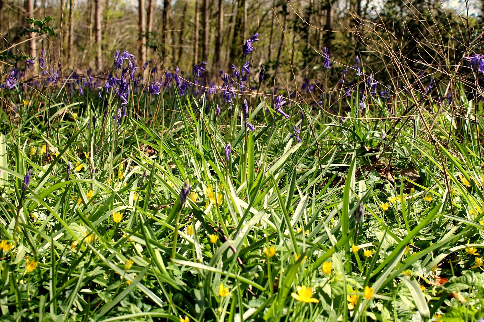 close up image of bluebells and buttercups