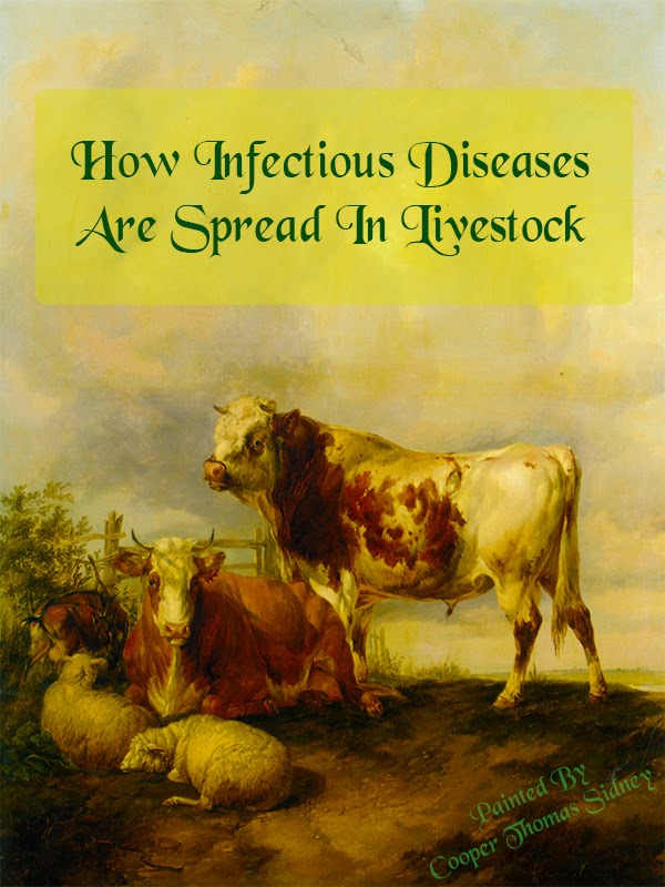 How Infectious Diseases Are Spread In Livestock
