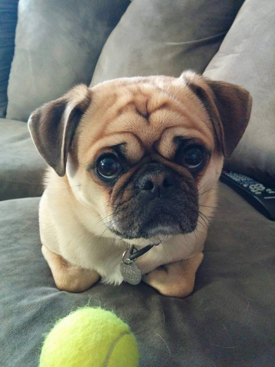 Cute dogs - part 99, cute dog photos, funny dog pictures, adorable dogs