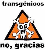 No a los transgénicos!!!!!