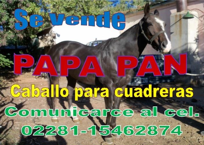 PAPA PAN