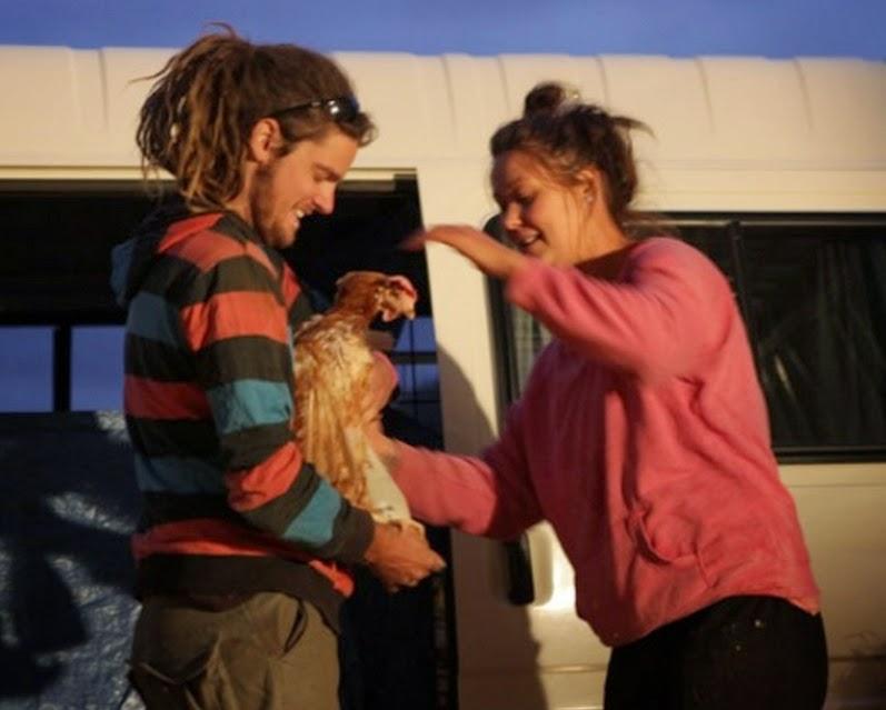Galinhas resgatadas aproveitam a liberdade pela primeira vez