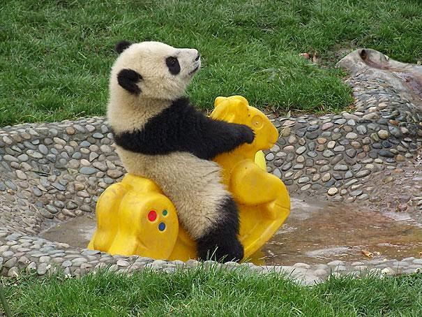 gambar beruang lucu