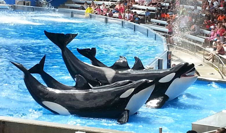 Sea World Orlando gives teachers free admission with their Teacher Study Pass program.