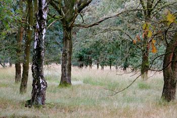 ein Spaziergang in der Heide ...