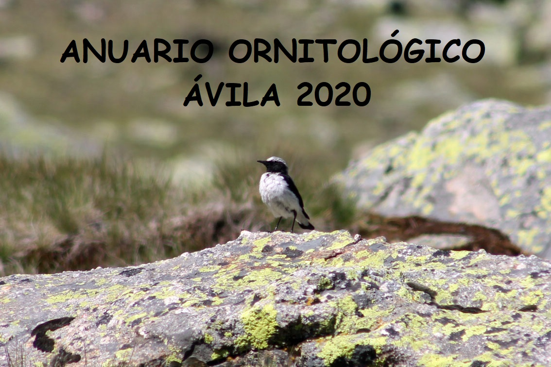 ANUARIO ORNITOLÓGICO ÁVILA 2020