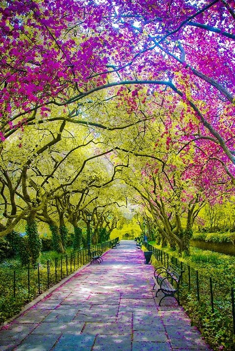 Spring time in central park new york city