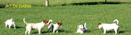 Criados en nuestra casa, un paraiso canino de 10.000 m2
