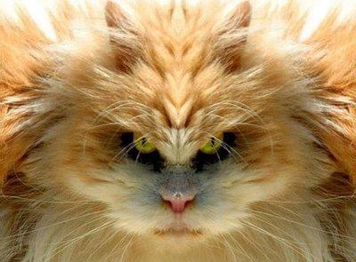 http://1.bp.blogspot.com/-_gn8dKh5xb8/Tm4rEFb0wYI/AAAAAAAAA80/JKlEIRlOFiA/s1600/Telepathic+Cat.jpg