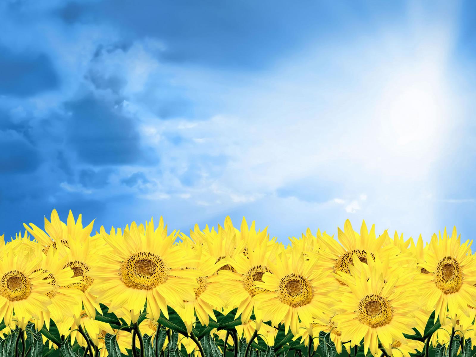 http://1.bp.blogspot.com/-_gpyYmr47yg/UN32712jbfI/AAAAAAAAJp4/OsiSaBXEcAw/s1600/ws_Sunflower_1600x1200.jpg