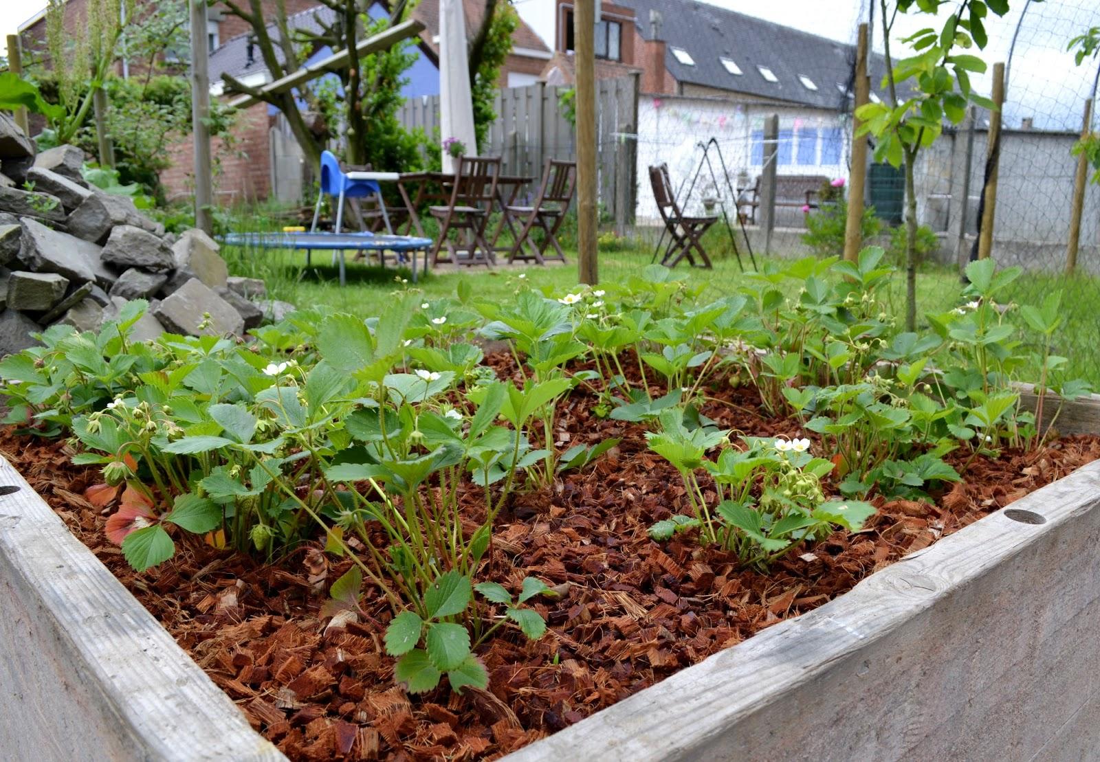 Vierkante Meter Tuin : De vierkante meter tuin