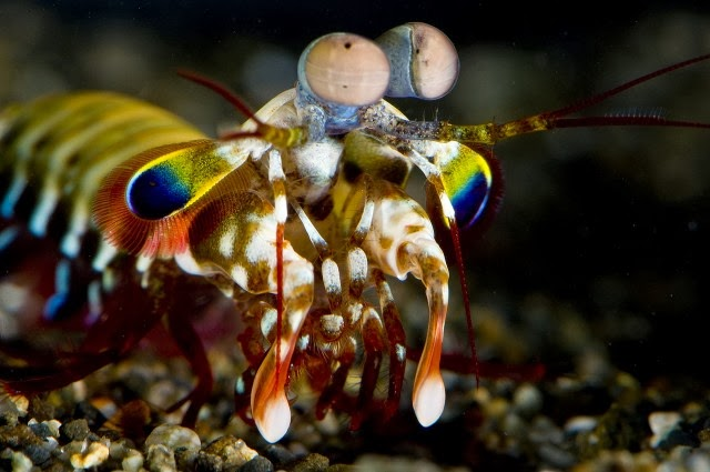 One of the strangest animals on earth gets a little weirder
