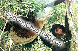 Mật ong thật mua ở đâu giá bao nhiêu?