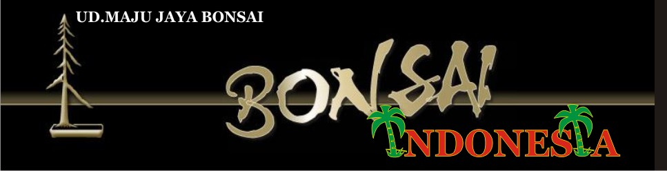 Jual Tanaman Hias Bonsai Indonesia