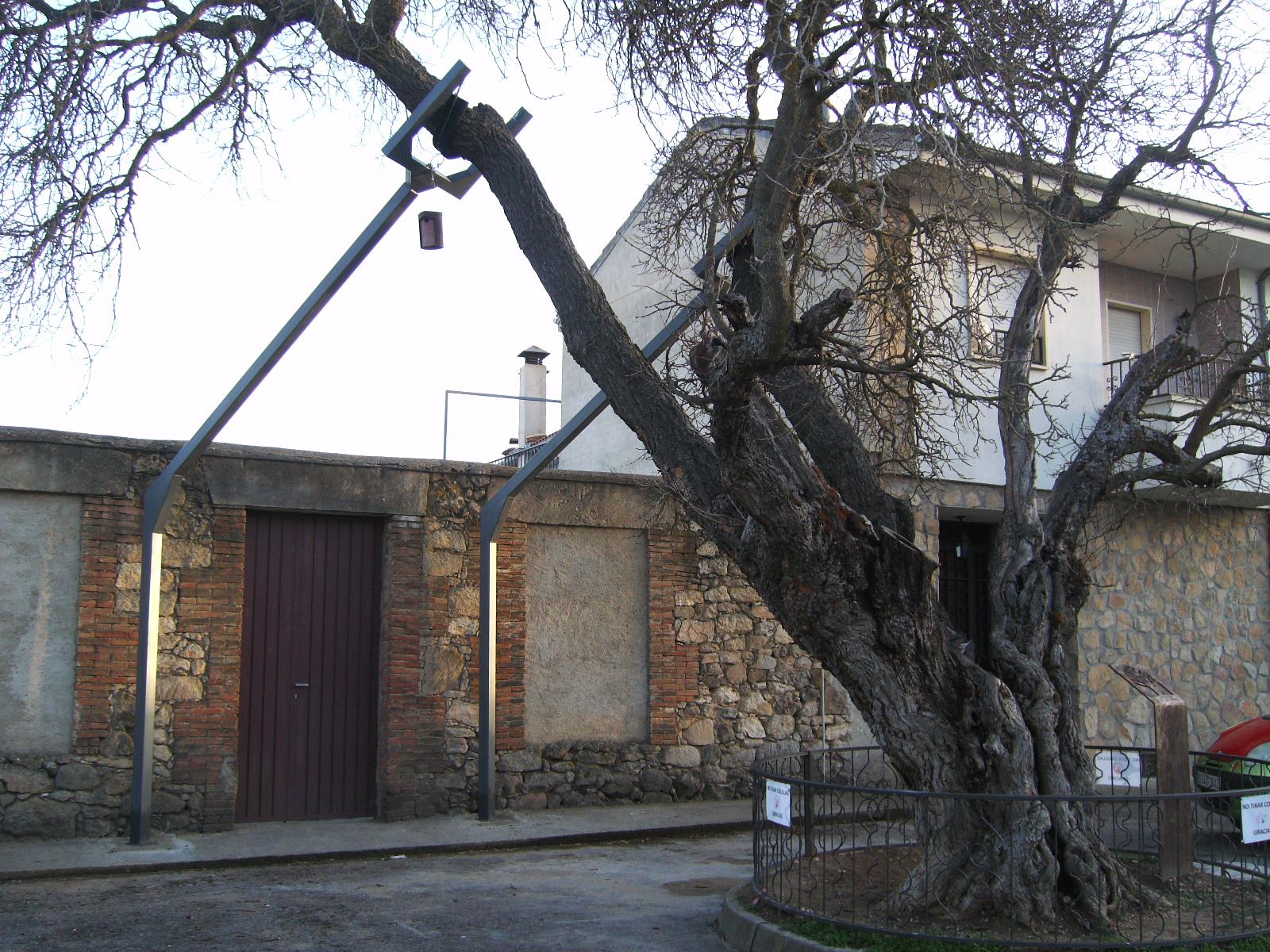 Rboles centenarios catedrales vivas del bosque - Maderas moral ...