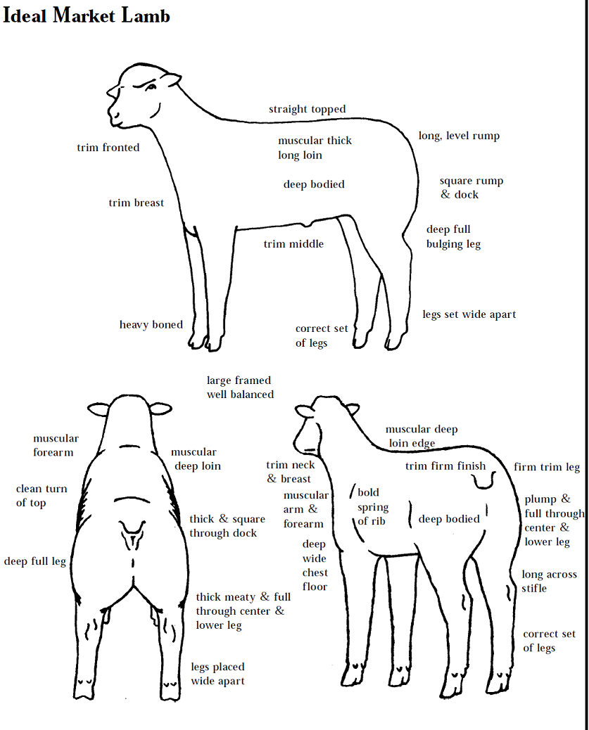 Agree2b moreover Lamb Body Parts Diagram moreover Flock Of Birds as well Male Cow Diagram in addition Artistic Experimental Vectors. on dog meat cuts