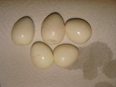 hard boiled quails eggs