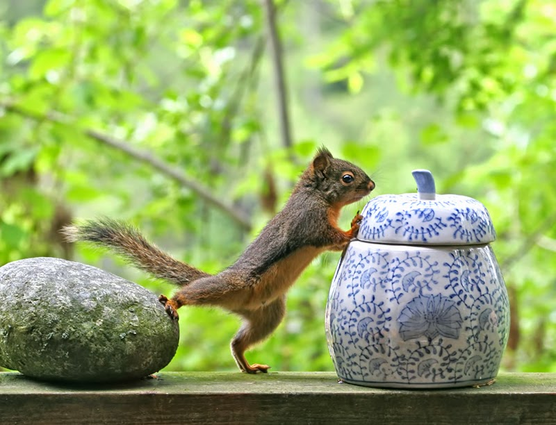 squirrel, cookie jar, ginger jar, between a rock and a hard place