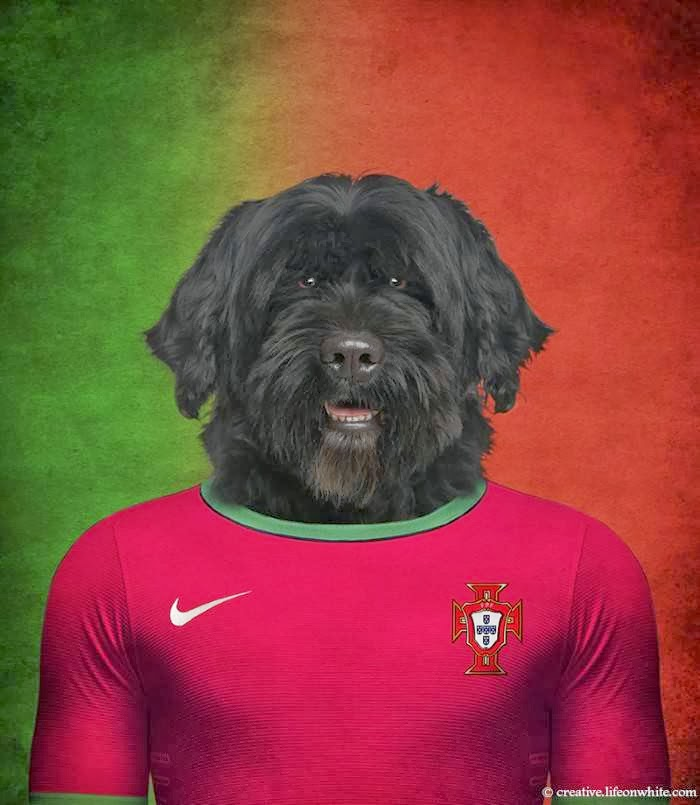 Portugal – Portuguese Water Dog