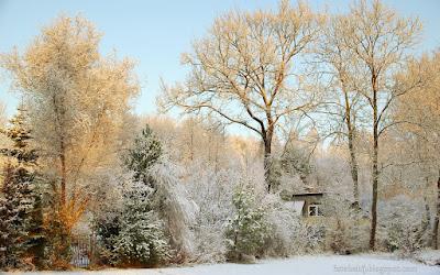 http://fotobabij.blogspot.com/2015/11/domek-wsrod-jesionow-wiazow-debow-i.html