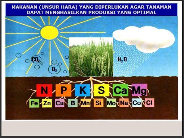 Fungsi unsur hara makro dan mikro pada tanaman serta kekurangannya